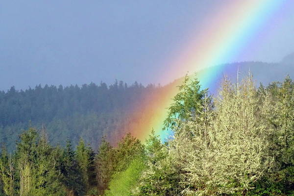 Photograph - Rainbow Entering Forest #3 by Ben Upham III