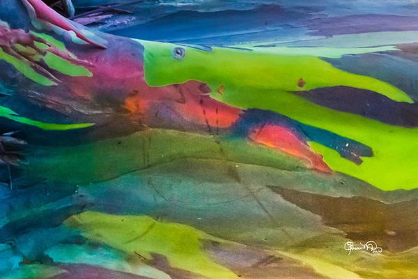 Photograph - Rainbow Eucalyptus 2 by Susan Molnar