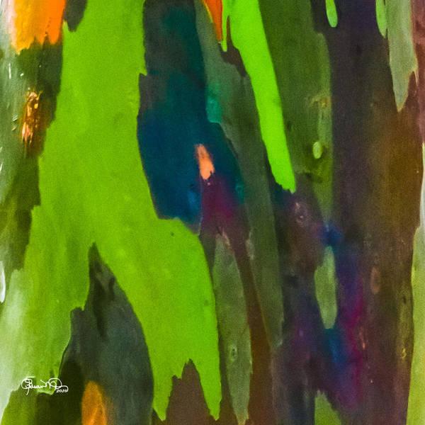 Photograph - Rainbow Eucalyptus 4 by Susan Molnar