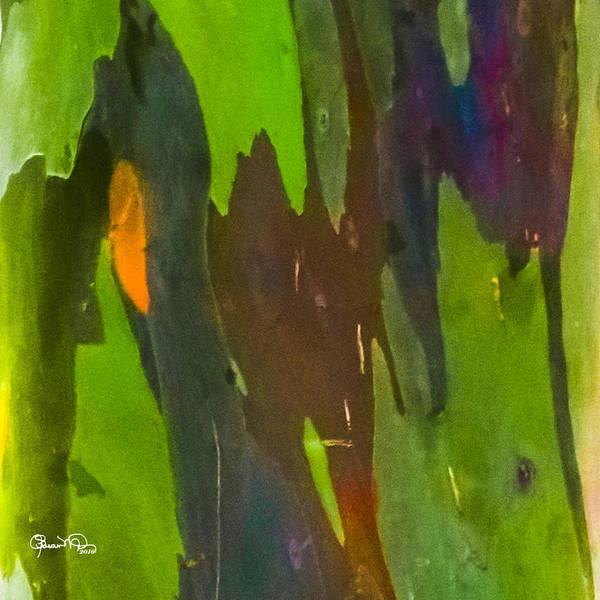 Photograph - Rainbow Eucalyptus 6 by Susan Molnar