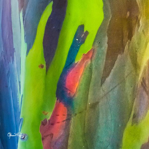 Photograph - Rainbow Eucalyptus 7 by Susan Molnar