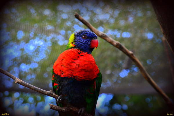 Photograph - Rainbow Lorikeet by Lisa Wooten