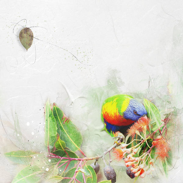 Bird Watching Digital Art - Rainbow Lorikeet by Margaret Goodwin