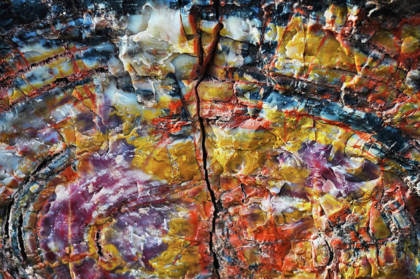 Photograph - Rainbow Petrified Wood Long Logs Trail by Kyle Hanson