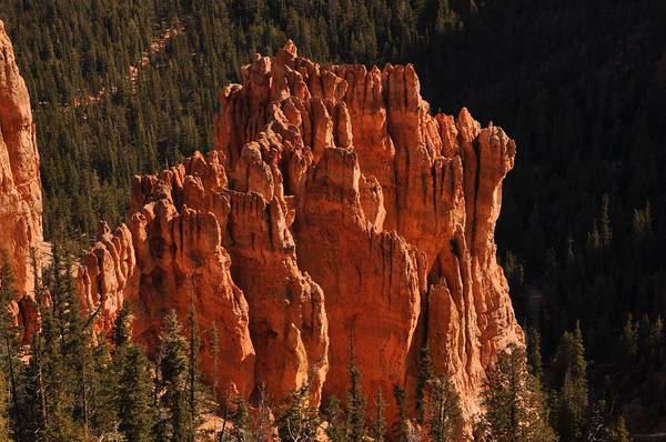 Photograph - Rainbow Point - Bryce Canyon by Frank Madia