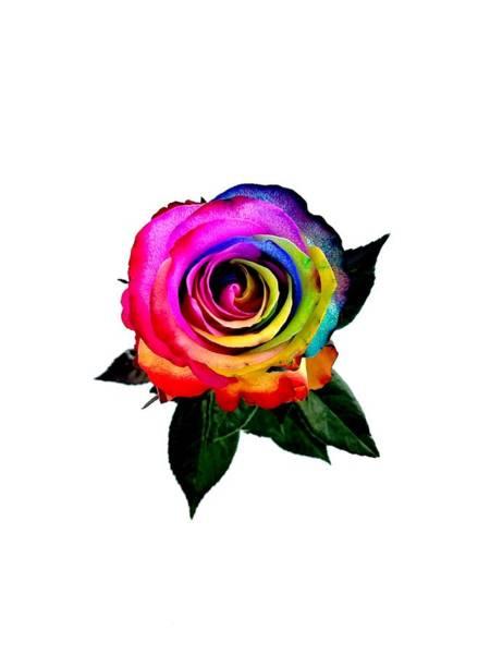 Photograph - Rainbow Rose  by Jennah Lenae