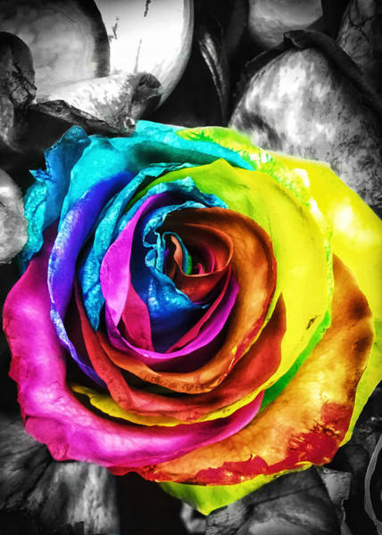 Photograph - Rainbow Rose by Nathan Little