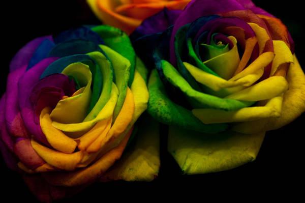 Rainbow Rose Wall Art - Photograph - Rainbow Roses by Jenny Rainbow
