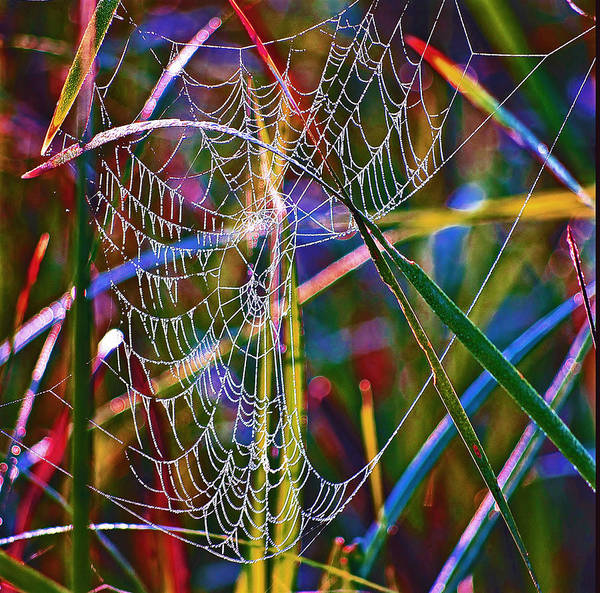 Photograph - Rainbow Spiderweb by Buddy Scott