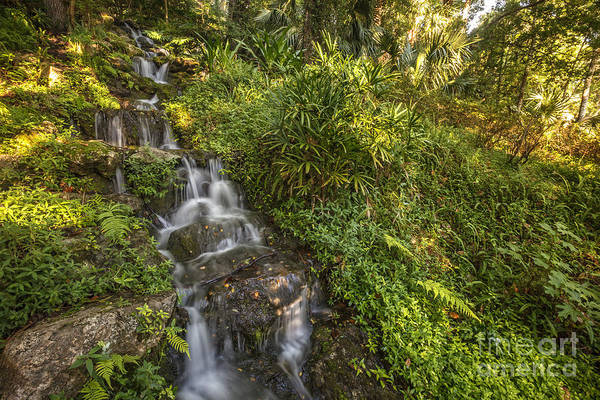 Photograph - Rainbow Springs Fall 2 by Tim Wemple