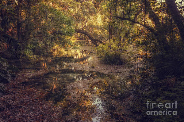 Photograph - Rainbow Springs by Tim Wemple