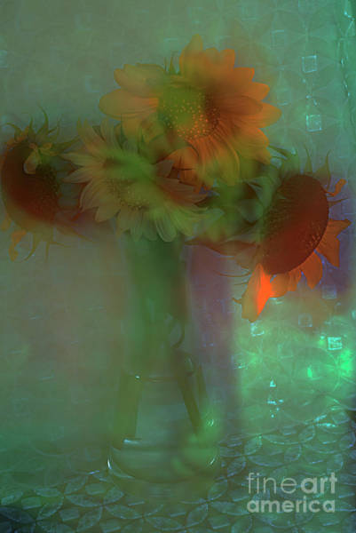 Alexander Vinogradov Photograph - Rainbow Sunflowers. by Alexander Vinogradov