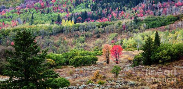Photograph - Rainbow Valley by David Millenheft