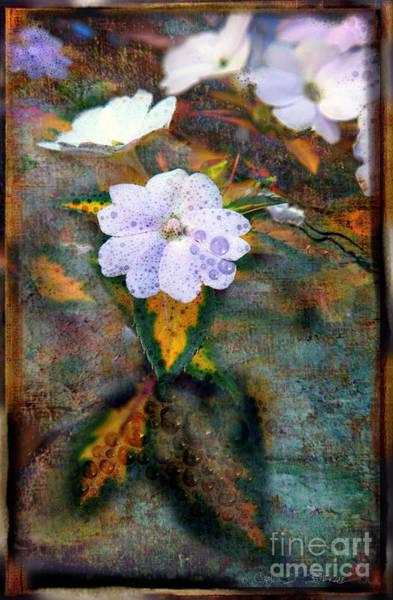 Photograph - Raindrop Flowers by Craig J Satterlee