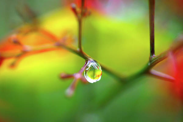 Photograph - Raindrop On A Branch With Colorful Background by Sergey Taran