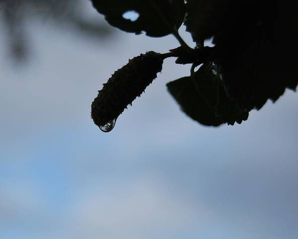 Wall Art - Photograph - Raindrop Silhouette by Marilynne Bull