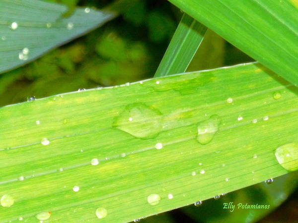 Photograph - Raindrops by Elly Potamianos