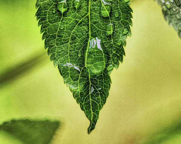 Wall Art - Photograph - Raindrops On A Spring Morn by Susan Capuano