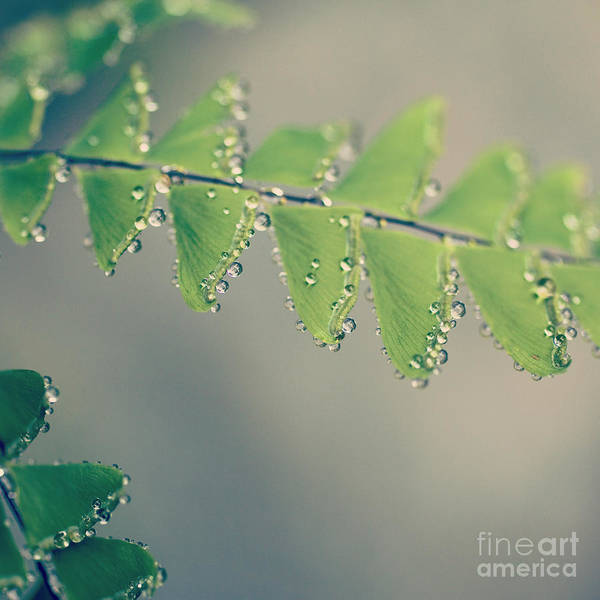 Photograph - Raindrops On Ferns - Hipster Photo Square by Charmian Vistaunet
