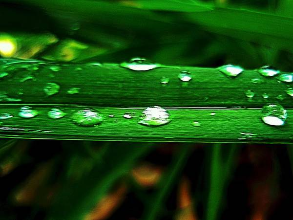 Photograph - Raindrops On Green by Beth Akerman