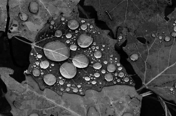Raindrops On Leaves Art Print