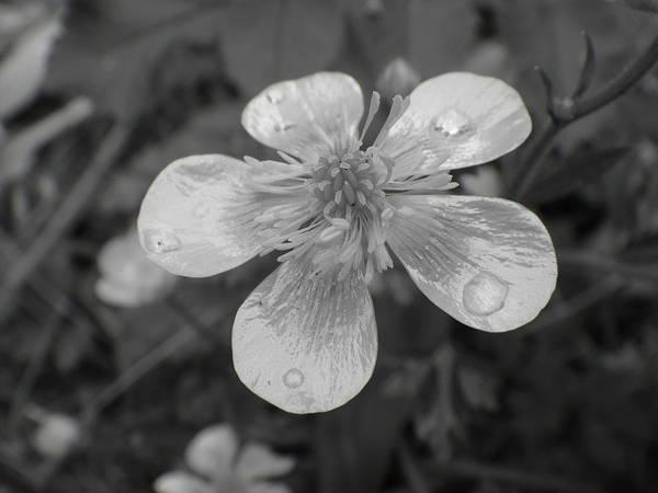Photograph - Raindrops by Roberto Alamino