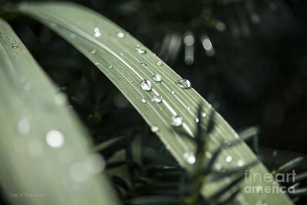 Photograph - Raindrops by Todd Blanchard