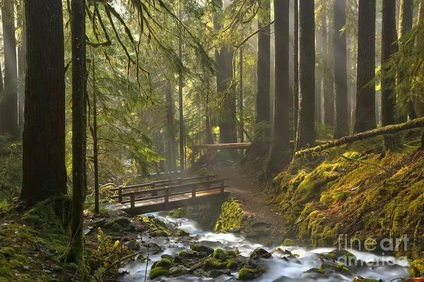 Photograph - Rainforest Crossing by Adam Jewell