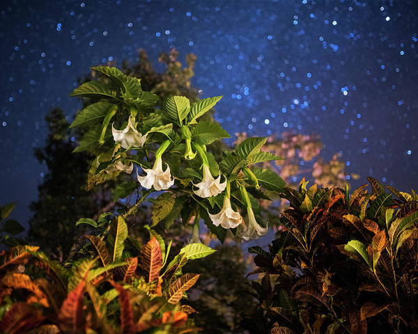 Photograph - Rainforest Flowers Belmopan Belize Starry Skies by Toby McGuire