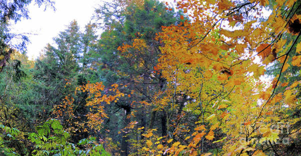Photograph - Rainforest In The Fall by Victor K