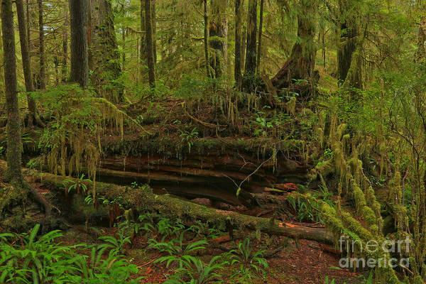Photograph - Rainforest Nurse by Adam Jewell