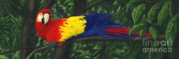 Rainforest Painting - Rainforest Parrot by JoAnn Wheeler