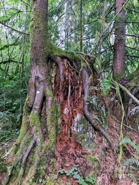 Photograph - Rainforest Renewal by Carol Groenen
