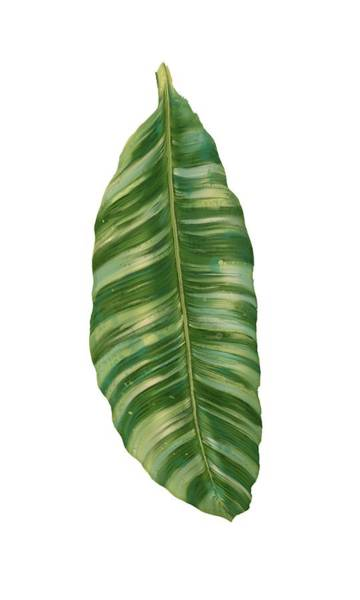 Leaf Painting - Rainforest Resort - Tropical Banana Leaf  by Audrey Jeanne Roberts