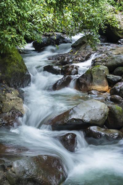 Wall Art - Photograph - Rainforest Stream by Oscar Gutierrez