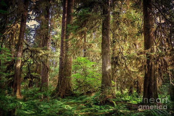 Wall Art - Photograph - Rainforest Trees by Joan McCool