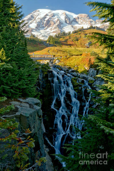 Photograph - Rainier Myrtle Falls by Adam Jewell