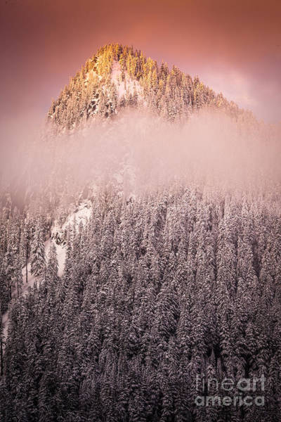 Photograph - Rainier Winter Scene by Inge Johnsson