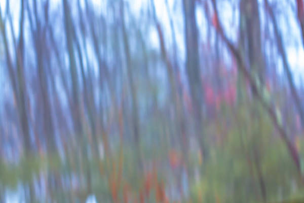 Photograph - Raining On The Trees by Brian MacLean
