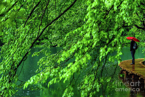 Raining Serenity - Plitvice Lakes National Park, Croatia Art Print