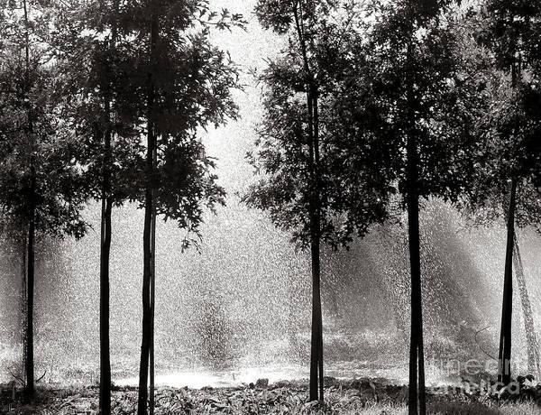 Photograph - Rainshower by Olivier Le Queinec