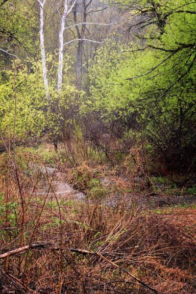 Photograph - Rainy Day Birches by Tom Singleton