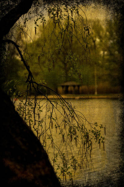 Photograph - Rainy Day In Prospect Park by Chris Lord
