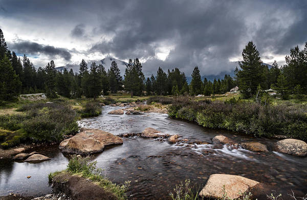 Photograph - Rainy Day In Yosemite by Cat Connor