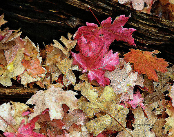 Photograph - Rainy Day Leaves by Matalyn Gardner