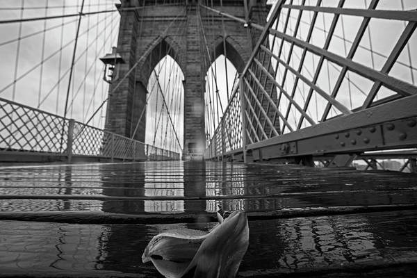 Photograph - Rainy Day On The Brooklyn Bridge Brooklyn New York Tulip Petals Black And White by Toby McGuire