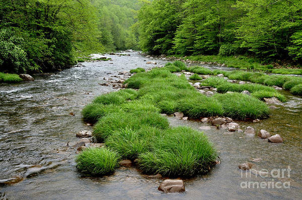 Allegheny Mountains Wall Art - Photograph - Rainy Day On Williams River  by Thomas R Fletcher