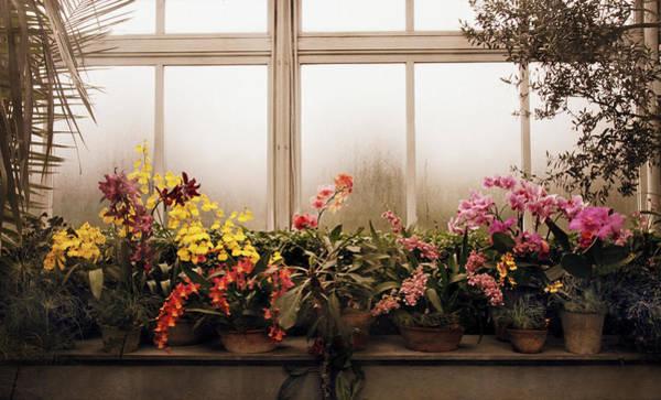 Photograph - Rainy Day Orchids by Jessica Jenney