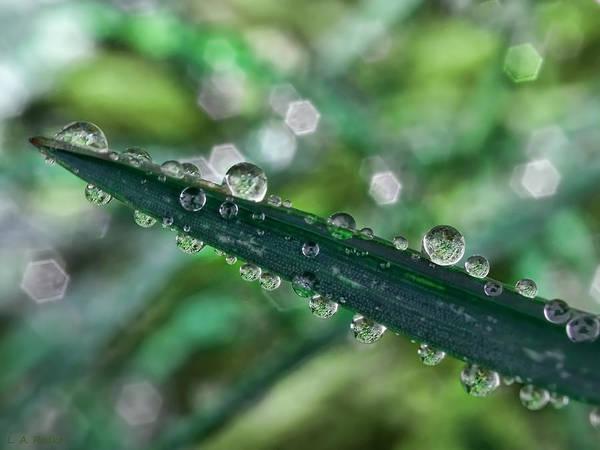 Photograph - Rainy Days by Lauren Radke