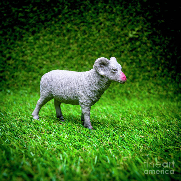 Wall Art - Photograph - Ram Figurine by Bernard Jaubert